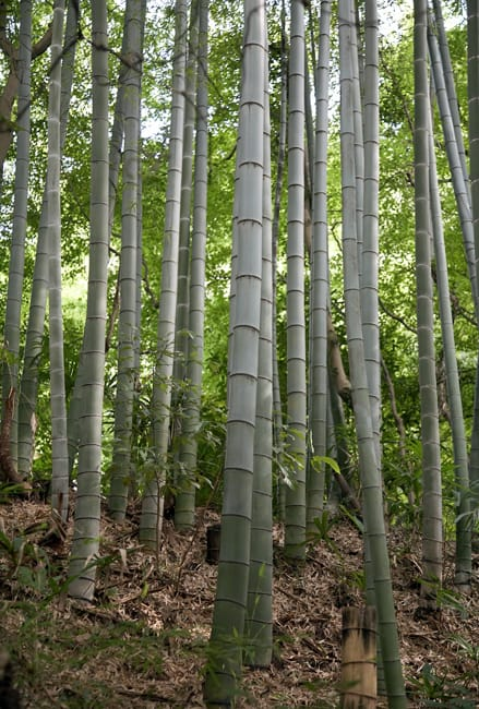 pht-serving-earth-bamboo