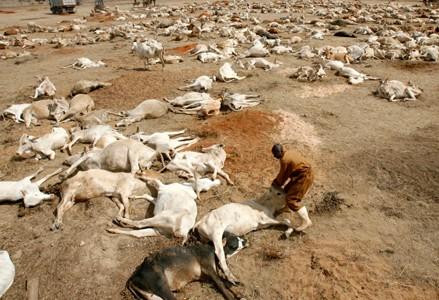 Dead Animals (Kenya)